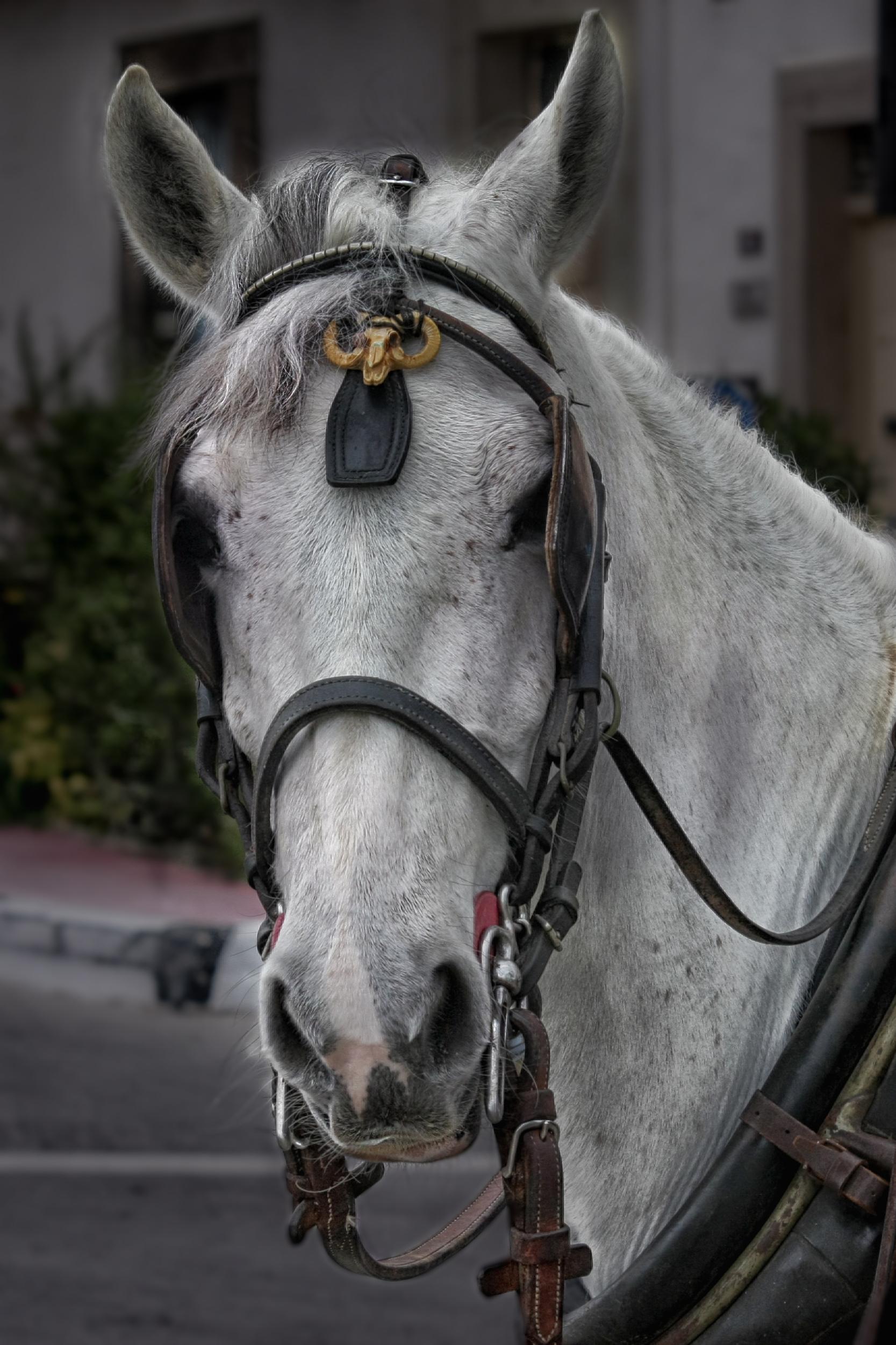 Schone Pferdebilder Kostenlos Downloaden Mjpics Fotografie