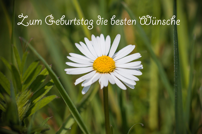 Geburtstag zum rosen sprüche Glückwünsche Geburtstag
